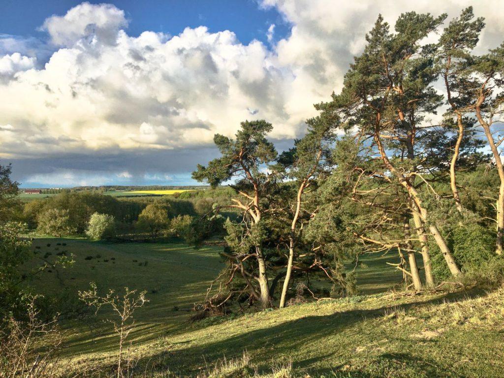 Landschaftsbild mit grünen Hügeln, Kiefern, Wildheit und großen Wolkenformationen